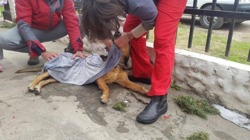 Perro rescatado por Bomberos junto a una veterinaria